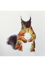 Graham, Peter Red Squirrel (Candied Mammals of the Boreal Forest), Peter Graham