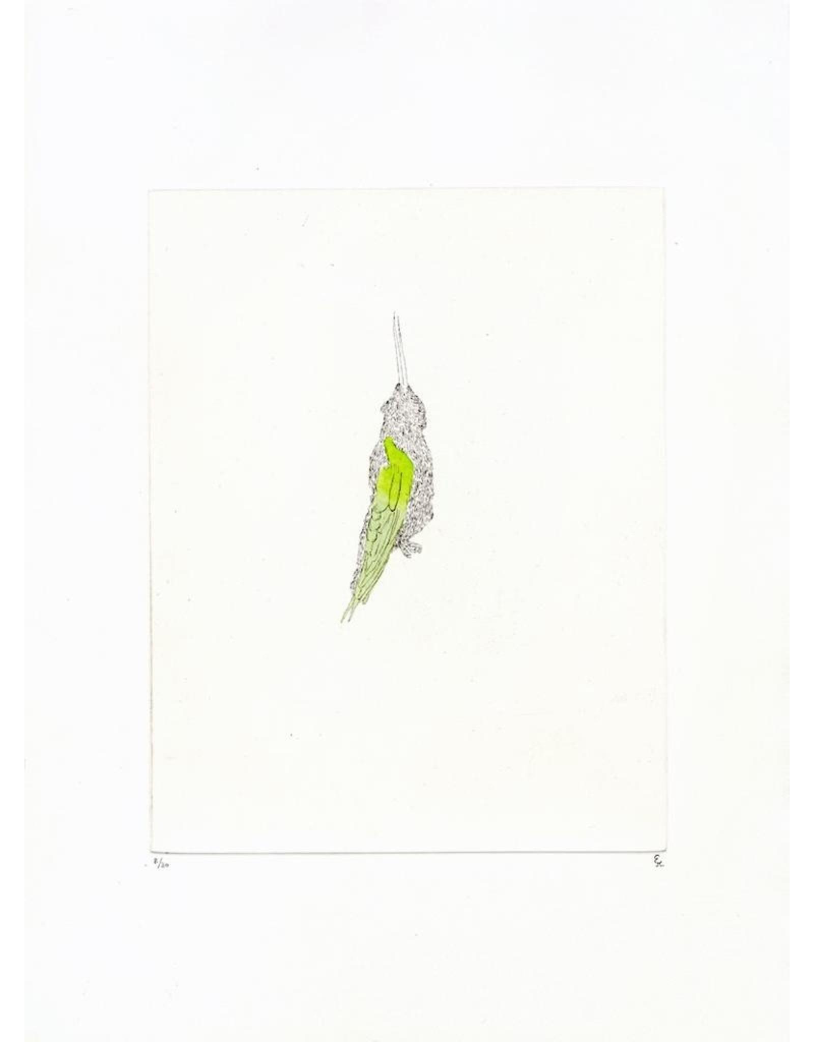 Josephson-Laidlaw, Erin Hummingbird, (from Some Specimens series), Erin Josephson-Laidlaw