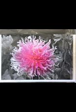 LeBlanc, Marie Flowergenics, Card