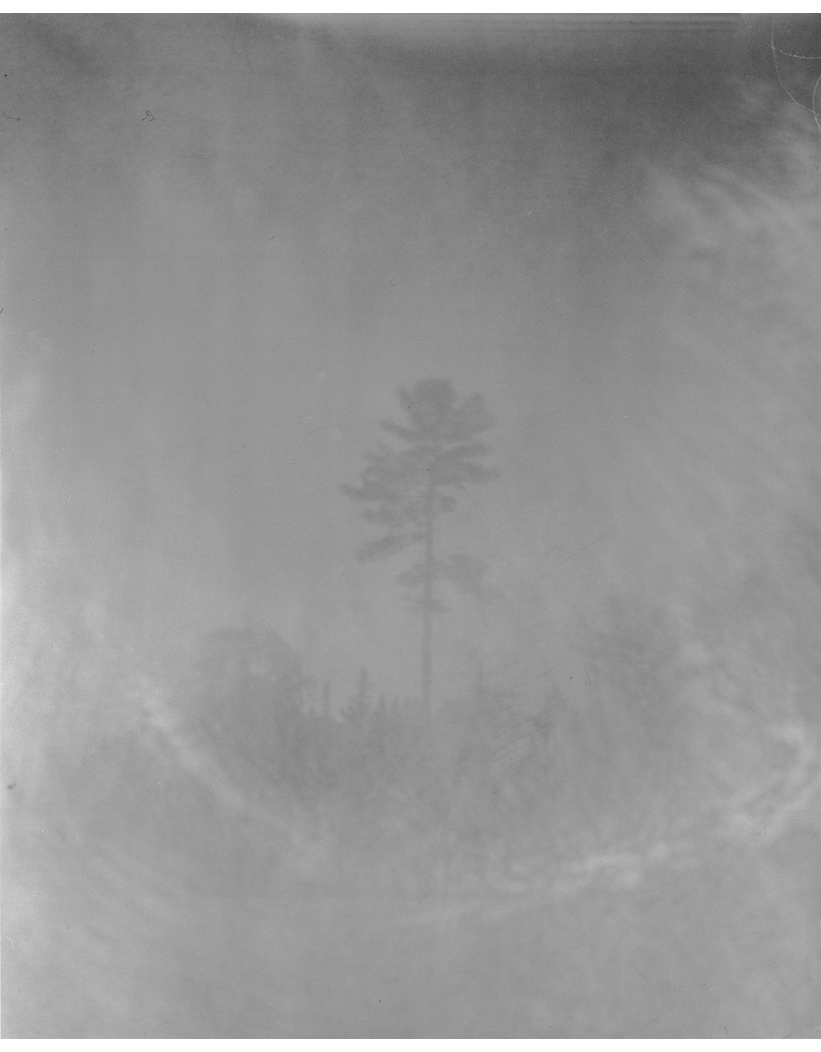 Fuller, Sarah Big Pine on the Highway on the Way to Temagami (Edition 1 of 3), Sarah Fuller
