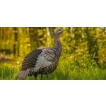 AvianX AvianX HDR Hen Turkey Decoy