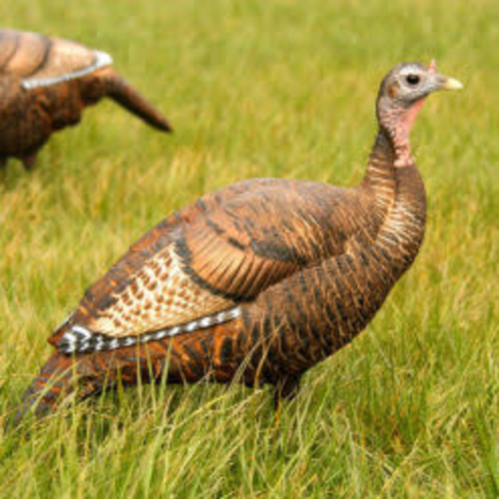 DSD DSD Upright  Hen Turkey Decoy