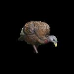 AvianX AvianX LCD Feeder Hen Turkey Decoy