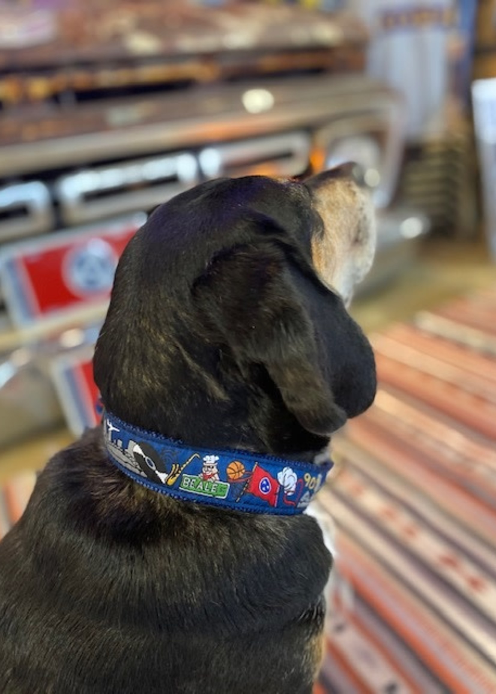 Belted Cow Memphis Scene Dog Collar