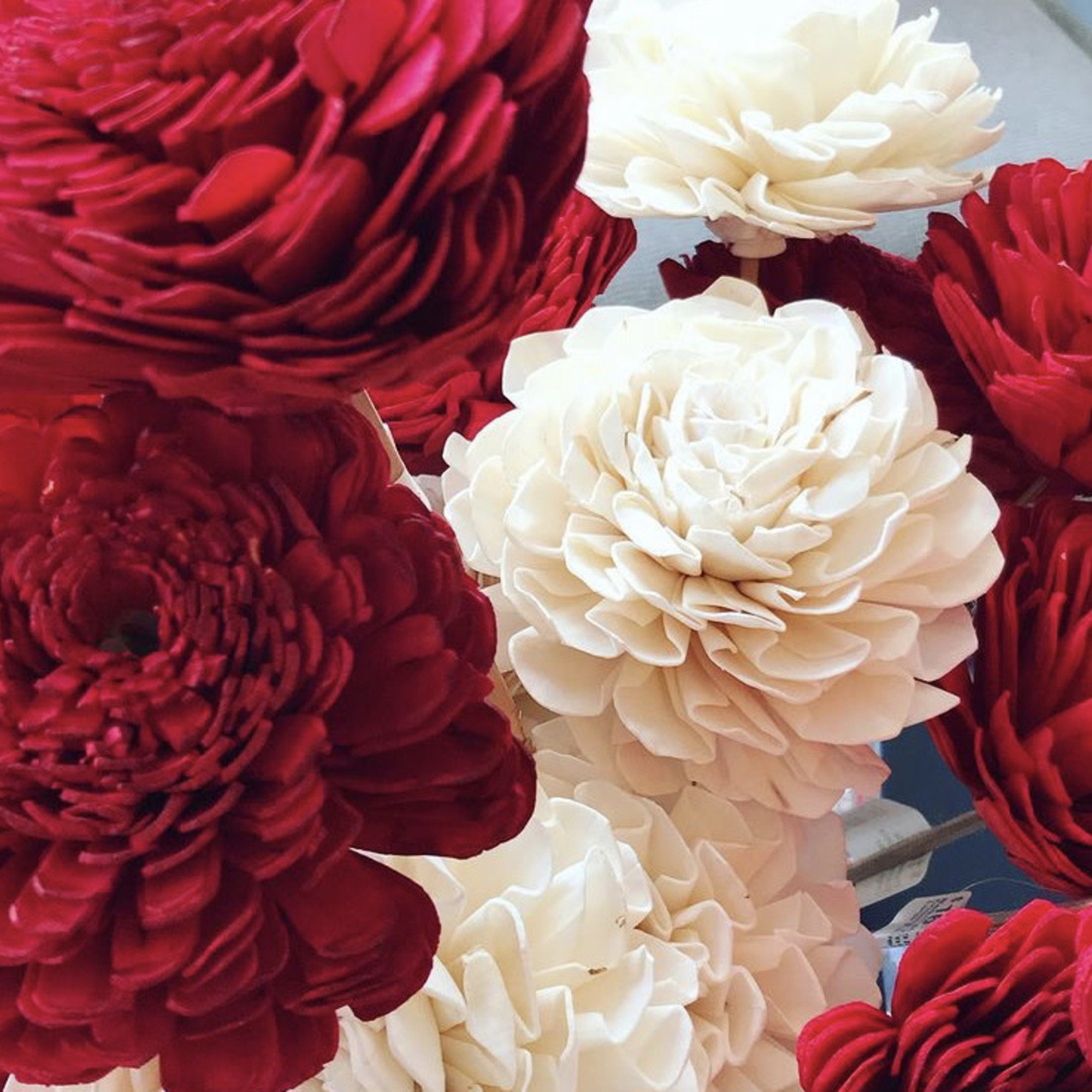 Market Shola Crimson Zinnia Large Flower