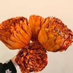 Market Shola Burnt Orange XL Flower