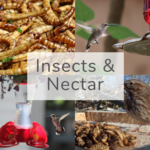Insects & Nectar