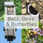 Bats, Bees, & Butterflies