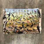 Placemat - Backyard Birds of Alberta