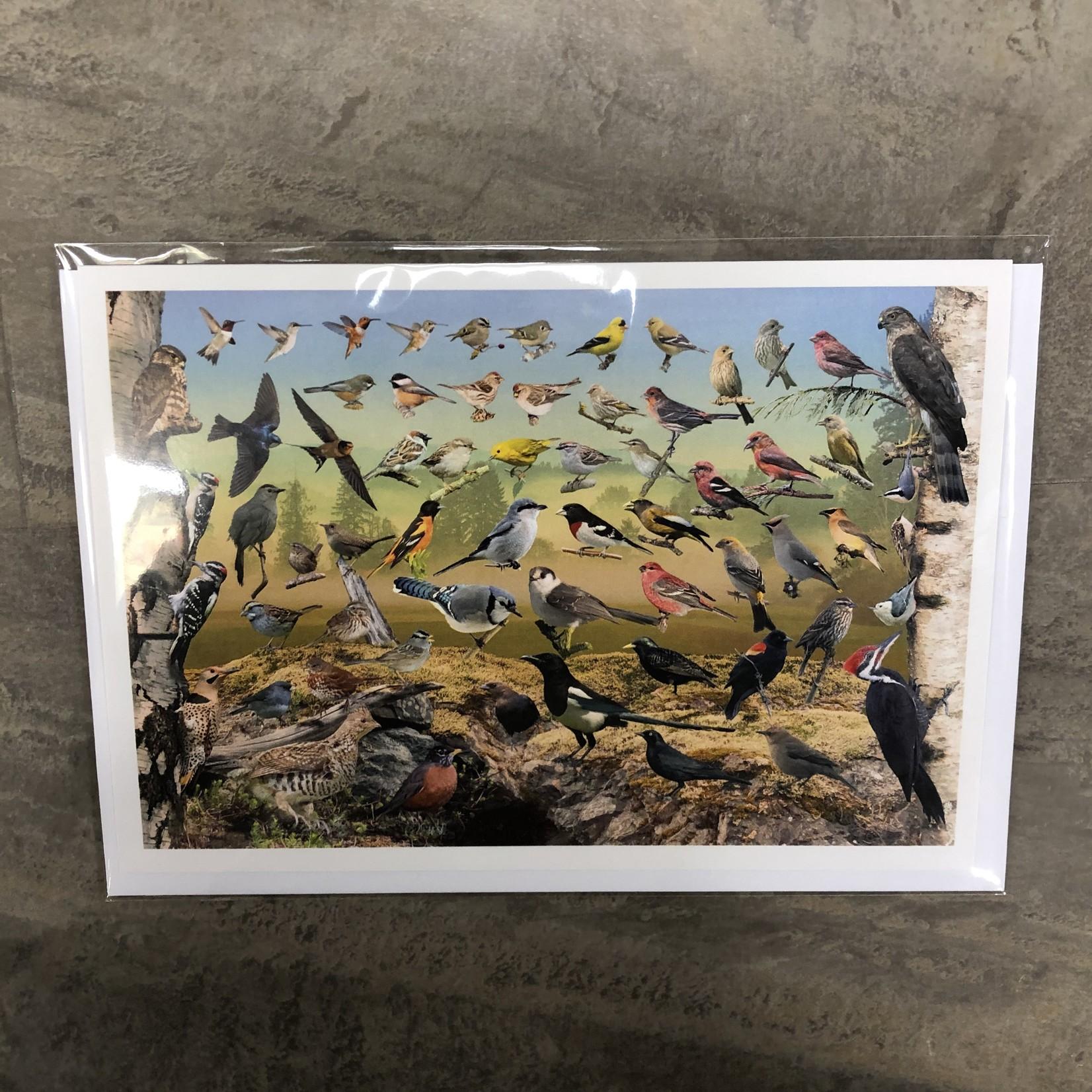 Field Guide Card - Backyard Birds of Northern Alberta
