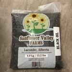 Black Oil Sunflower