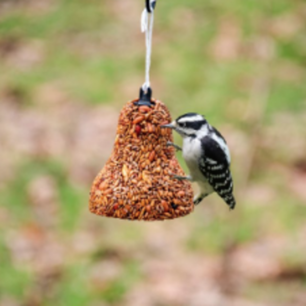 FEED MR BIRD FLAMING HOT FEAST SEED BELL
