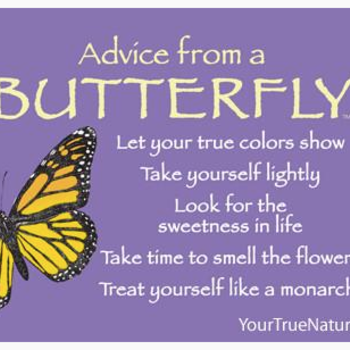 HHOLD ADVICE FROM A BUTTERFLY MAGNET
