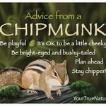 HHOLD ADVICE FROM A CHIPMUNK MAGNET