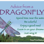 HHOLD ADVICE FROM A DRAGONFLY MAGNET