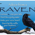 HHOLD ADVICE FROM A RAVEN MAGNET