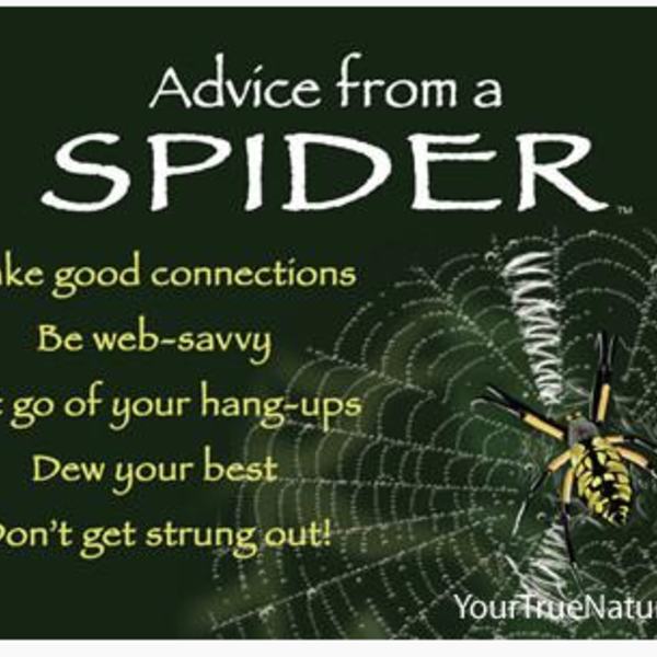 HHOLD ADVICE FROM A SPIDER MAGNET