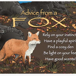 HHOLD ADVICE FROM A FOX MAGNET