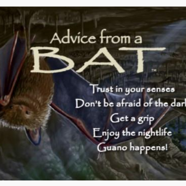 HHOLD ADVICE FROM A BAT MAGNET