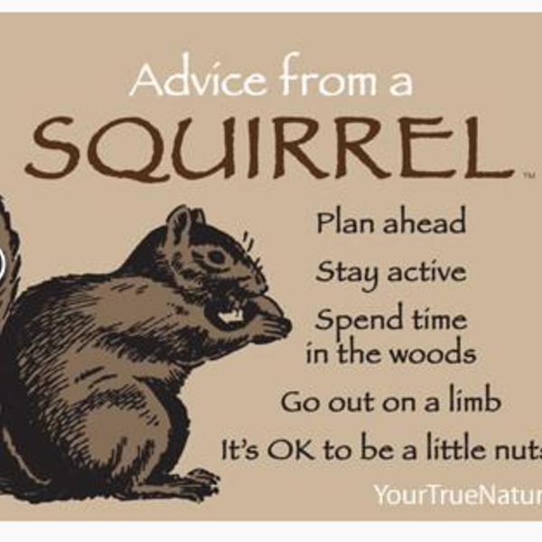 HHOLD ADVICE FROM A SQUIRREL MAGNET