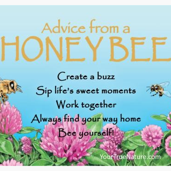 HHOLD ADVICE FROM A HONEY BEE MAGNET