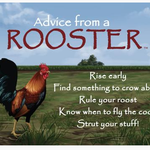 HHOLD ADVICE FROM A ROOSTER MAGNET