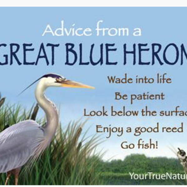 HHOLD ADVICE FROM A GREAT BLUE HERON MAGNET