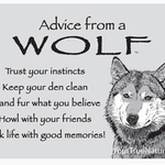 HHOLD ADVICE FROM A WOLF MAGNET