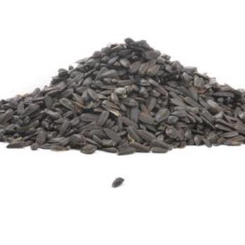 FEED BLACK OIL SUNFLOWER SEED #25 LB.