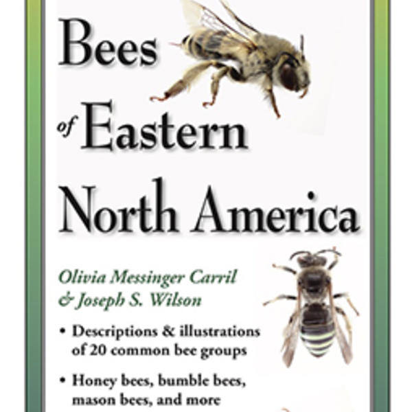 GUIDE COMMON BEES OF EASTERN NORTH AMERICA FOLDING GUIDE