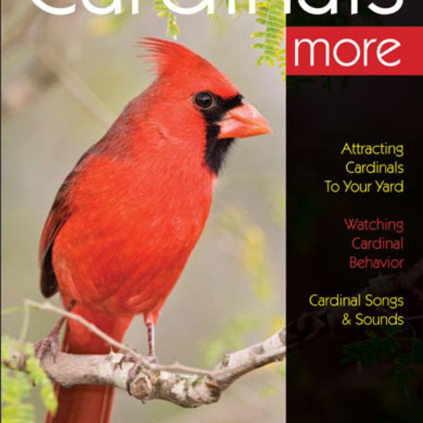 GUIDE BIRD WATCHER'S DIGEST: ENJOYING CARDINALS MORE
