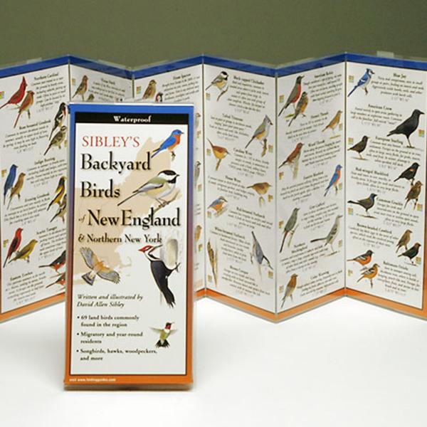 GUIDE SIBLEY'S BACKYARD BIRDS OF THE NORTHEAST FOLDING GUIDE