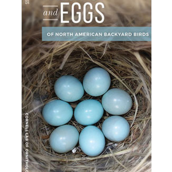 GUIDE CORNELL NESTS AND EGGS OF NORTH AMERICAN BACKYARD BIRDS FOLDING GUIDE