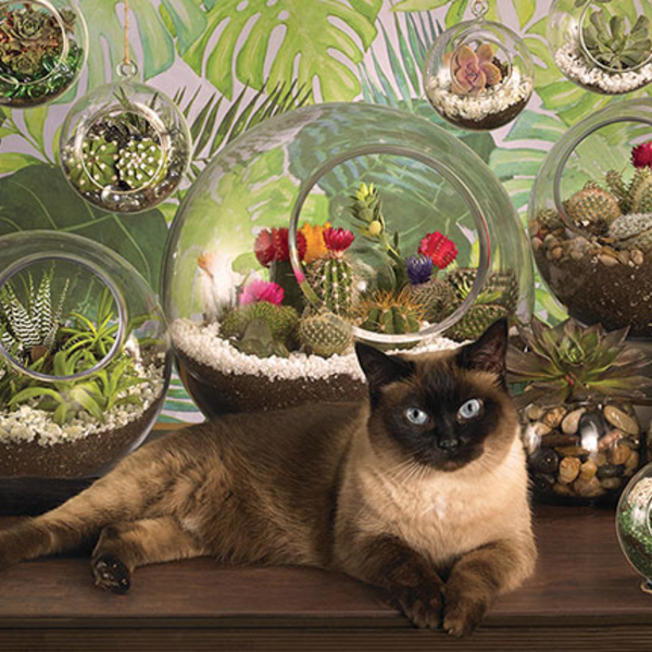 PUZZLES COBBLE HILL TERRARIUM CAT PUZZLE 1000PC