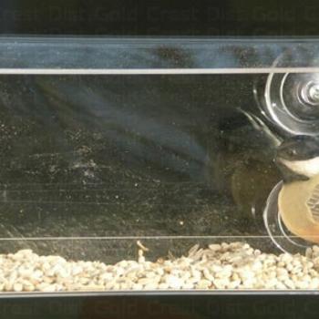 FEEDERS SONGBIRD ESSENTIALS OPEN DINER WINDOW FDR