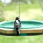 BATHS SONGBIRD ESSENTIALS MINI HANGING BIRDBATH GREEN