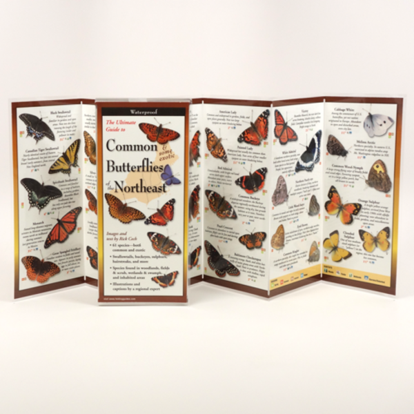 GUIDE COMMON & SOME EXOTIC BUTTERFLIES OF THE NORTHEAST FOLDING GUIDE