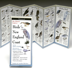 GUIDE BIRDS OF THE NEW ENGLAND COAST FOLDING GUIDE