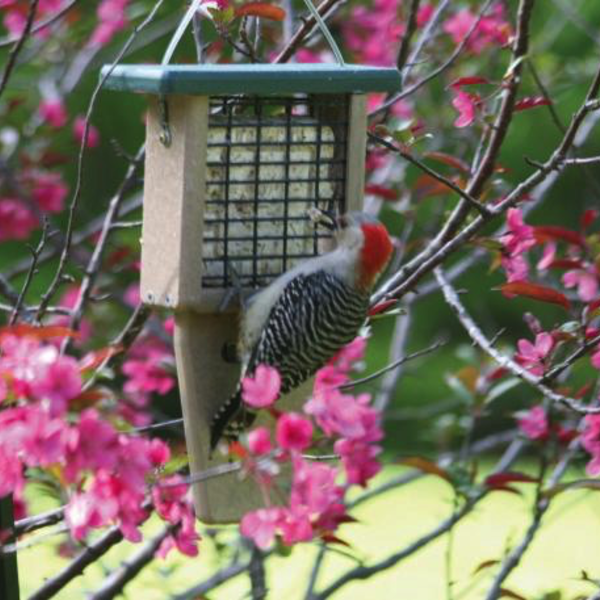 FEEDERS BIRDS CHOICE RECYCLED TAIL PROP SUET FEEDER