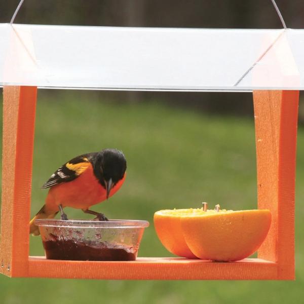 FEEDERS BIRDS CHOICE GREEN SOLUTIONS ORIOLE FEEDER