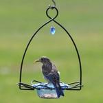 FEEDERS BIRDS CHOICE BLUEBIRD FLOWER FEEDER