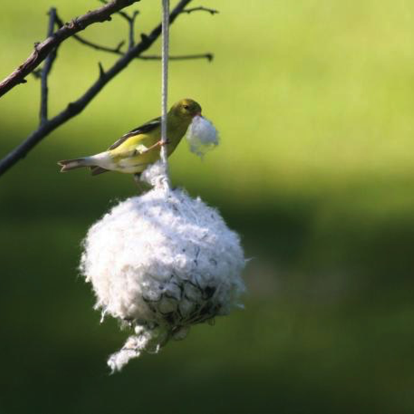 HOUSES BIRDS CHOICE COTTONTAIL NEST BUILDING MATERIAL