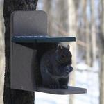 FEEDERS BIRDS CHOICE RECYCLED SQUIRREL MUNCH BOX