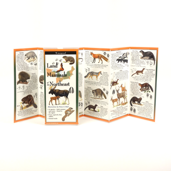 GUIDE LAND MAMMALS OF THE NORTHEAST FOLDING GUIDE
