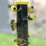 FEEDERS BIRDS CHOICE MAGNET MESH NYJER CLEVER CLEAN YELLOW  FEEDER