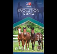 Evolution Juvéline