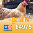 Cargill-Purina 64975 - GOLD'N Layena concassé