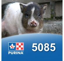 5085 - Nourriture pour mini cochon