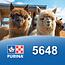 Cargill-Purina 5648 - Alpaca maintenance