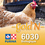 Cargill-Purina 6030 - GOLD'N Layena Biologique pour ponte
